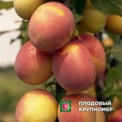 """Алыча """"Колоновидная"""""""