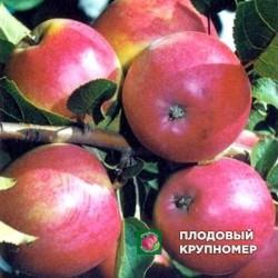 """Яблоня """"Афродита"""" (средние сорта)"""
