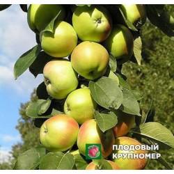 """Яблоня """"Белоснежка"""" (Колоновидные яблони)"""