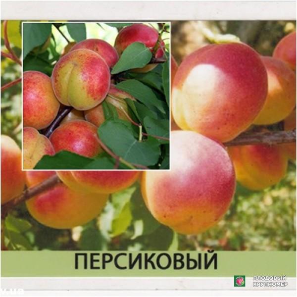 Саженцы Персиковый - Мечта