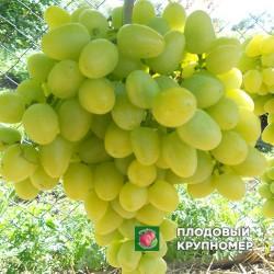 """Виноград """"Аркадия"""" (белые сорта)"""