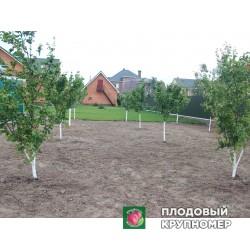 Высаженный плодовый сад и наши работы